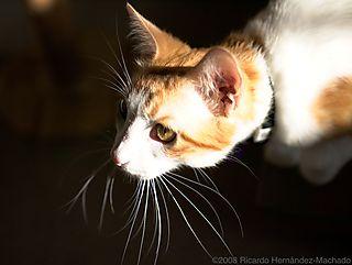 P6210686_cat_lz (1)