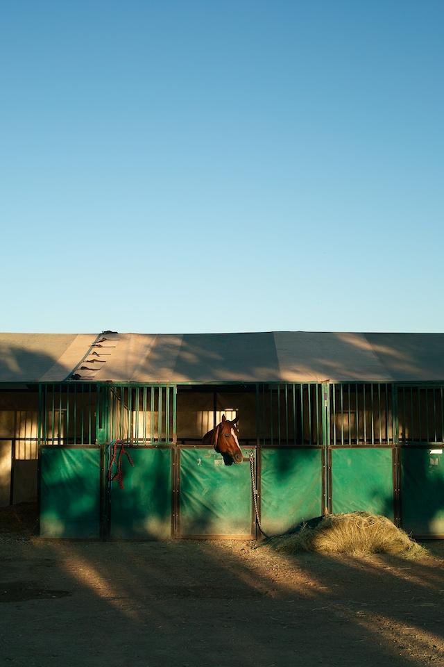 Horsesatuday_july_20106
