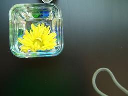 FlowerInWater