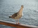 Birdcurious